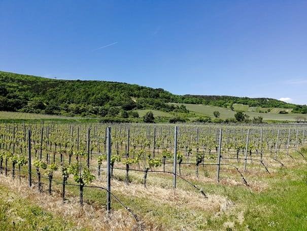 Vineyards in the Vienna Woods